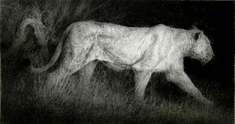 The Last Lioness. Black chalk and pencil drawing.