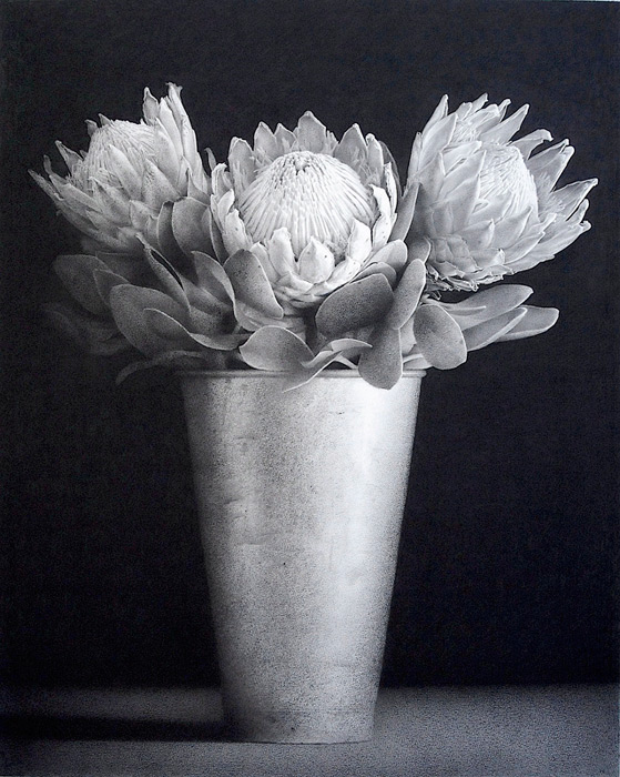 King Proteas 2. Black chalk and pencil drawing. 113 x 91 cm.