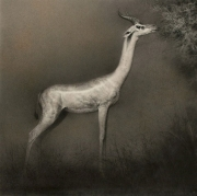 Gerenuk. Black and brown chalk drawing.