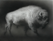 Bison. Chalk drawing. 94 x 120.3 cm.
